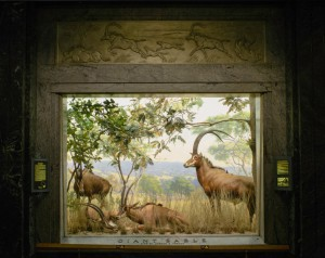 American-Museum-Of-Natural-History-Before-And-After-06B-1024x815
